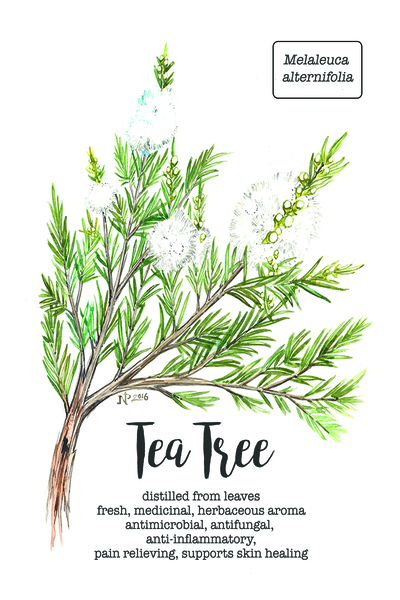Full 5_tea tree_card_4x6.jpg Print
