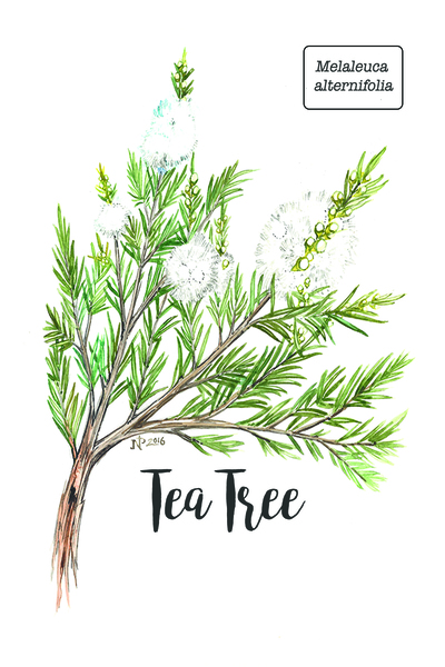Simple 5_tea tree_card_4x6.jpg Print
