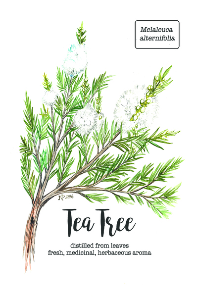 Moderate 5_tea tree_card_4x6.jpg Print